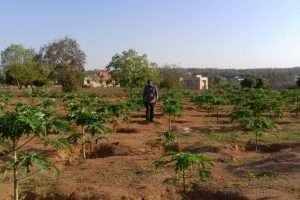 Bishop Charles walks through the Papaya Fruit Farm
